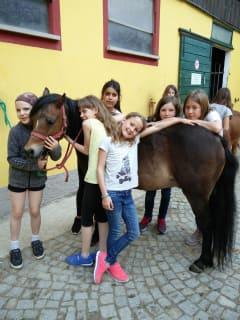 Pony - Kuscheln