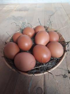 Eier von unserem Hof