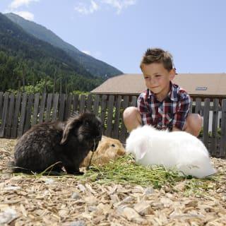 Petting zoo with plenty of animals
