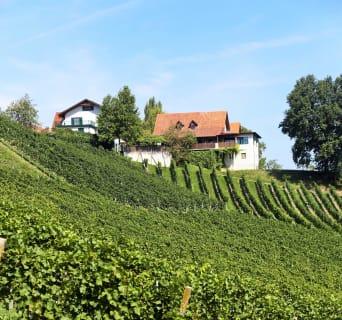 Blick über die Weinhänge zum Buschenschank