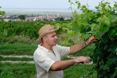 Manfred Karner kontrolliert seine Weingärten.