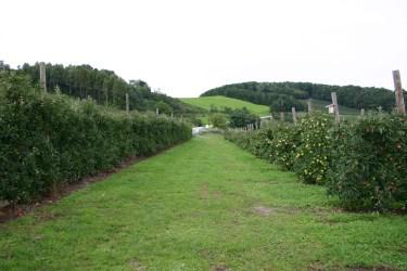 Apfelgarten 1