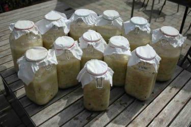 Sauerkraut aus Arabien