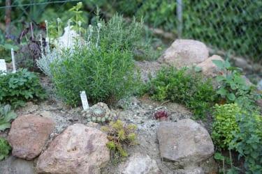 Ein Kräutergarten für Sie