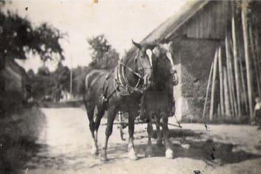 Pferdegespann vor dem Hof