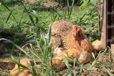 Eine von 9 Eierlieferanten