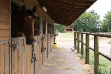Pferde Aussenboxen