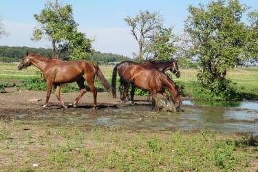 unsere Pferde im Schlammloch