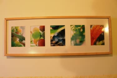 Bild Vegetationsverlauf Weingarten