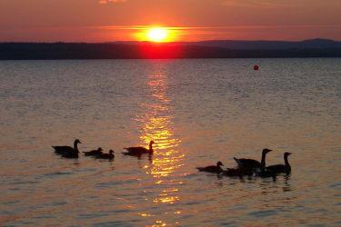 Abendstimmung am Neusiedlersee