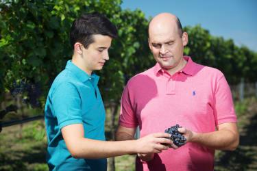 im Weingarten