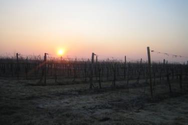 Winter im Weingarten