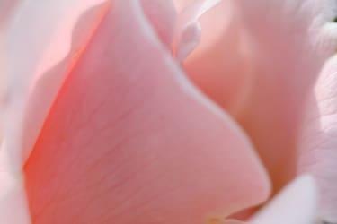Impression Rosen im Innenhof