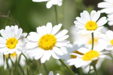 Sommerblumen in Innenhof