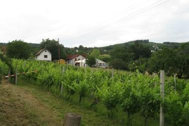 Weingebirge