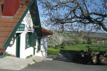 Blick zu den Kirschbäumen