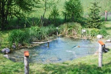 Malehof - Fischteich
