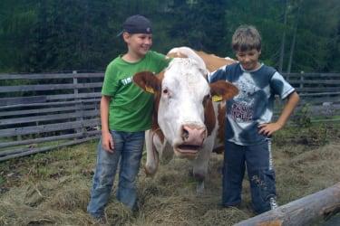 Kühe und Kinder . Die herzhafte Freundschaft zwischen Tier und Gast