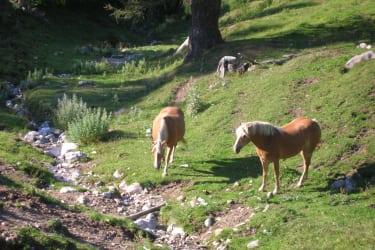 Pferde vor der Hütte am Bach