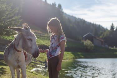 Streicheleinheiten für unseren Esel Hanni