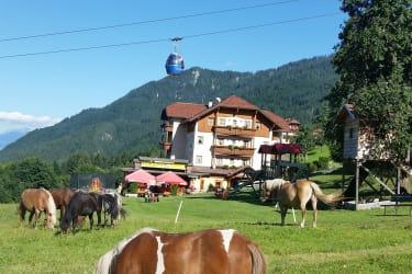 Unsere Ponys und Haflinger