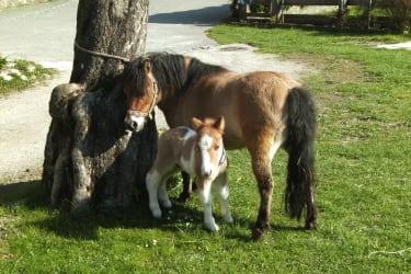 Kitty mit Baby Knut geb.am 14.04.11