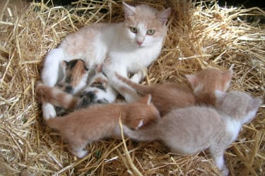 Katzenfamilie