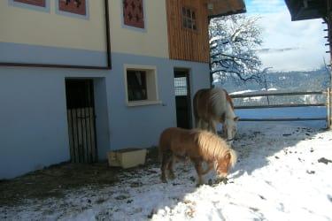 Unser Pferde