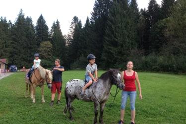 Unser Haflinger Arabella und Pony Max