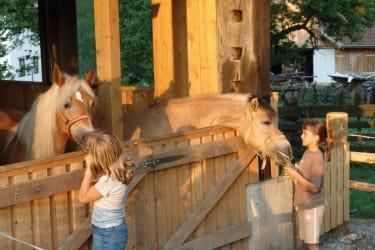 2 unserer Pferde