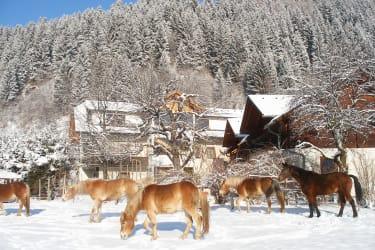 Pferdekoppel vor dem Knallerhof