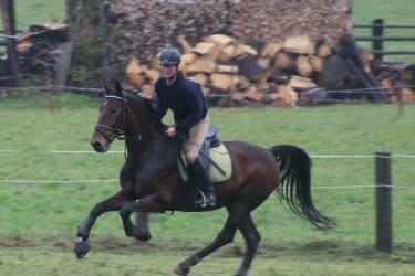 Harmonie und Eleganz zwischen Pferd und Reiter