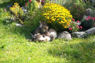 die kleinen Kätzchen lieben es bei den Blumen
