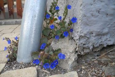 Farbe an der Hausmauer