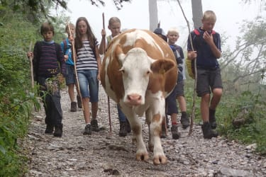 Kühe-treiben-alle-helfen-mit