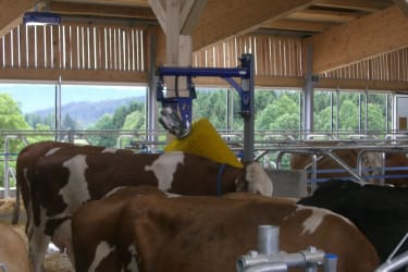 wellness unserer kühe