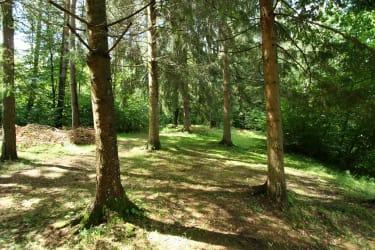 Umgebende Wiesen und Wälder laden zum Wandern und Pilzesuchen ein.