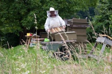 fleißig wie die Bienen3