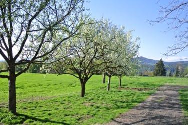 Frühling am Wunderhof