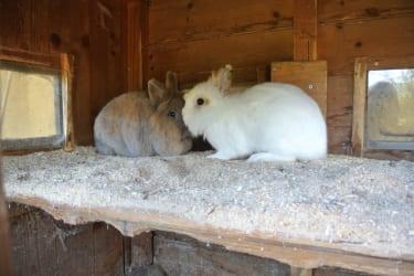 Mümmel und Flo