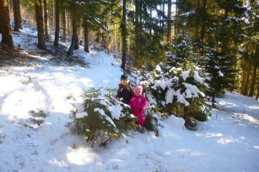 Weihnachtsbaum suchen