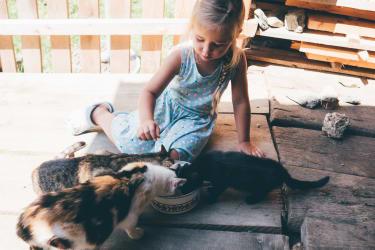 Katzen - füttern