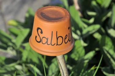 Salbei Haberlehof