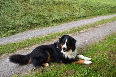 Hofhund Rocky