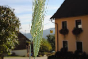 Schlintl-Hof im Herbst