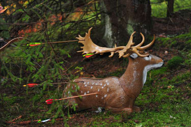 3-D-Jagdparcours