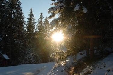 Forststraße im Winter
