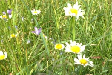 Blumenmeer vor dem Almhaus Strutz