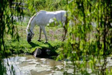 eines unserer Pferde