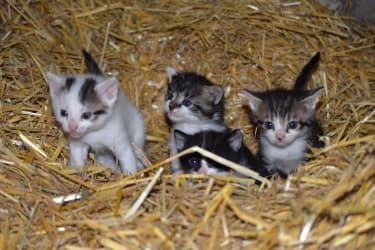 Nachwuchs bei den Katzen